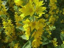 Våren är dags att vara lycklig Fotografering för Bildbyråer