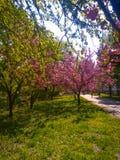 Våren är den bästa säsongen i året royaltyfri fotografi