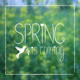 Våren är det kommande kortet på suddig bakgrund Arkivfoto