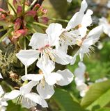 Våren är i luften: Blomningar Royaltyfria Bilder