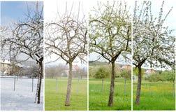 Våren är kommande Arkivbilder