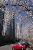 Våren är kommande i Pekingstad i Kina Arkivbilder