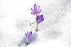 Våren börjar Arkivfoton