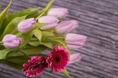 Våren blommar buketten av lila tulpan och gerberaen på grå bakgrund Royaltyfria Bilder
