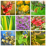 Våren blommar collage arkivfoto