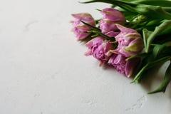 Våren blommar dag för ` s för tulpankvinnakvinnor Arkivbild