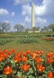 Våren blommar framme av Washington Monument, Washington, D C Arkivfoto