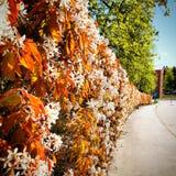 Våren blommar härliga soliga Sverige Royaltyfri Foto