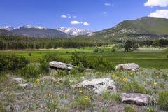 Våren blommar i de steniga bergen Arkivbilder
