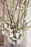 Våren blommar i en glass bästa sikt arkivbilder