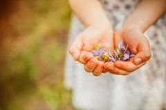 Våren blommar i händerna Arkivbild