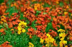 Våren blommar i parkera Royaltyfri Bild