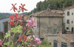 Våren blommar mot byggnader i Tuscany, Italien Arkivbild