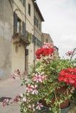 Våren blommar mot byggnader i Tuscany, Italien Royaltyfri Bild