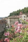 Våren blommar mot byggnader i Tuscany, Italien Royaltyfri Fotografi