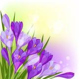 Våren blommar naturlig bakgrund för krokus royaltyfri illustrationer