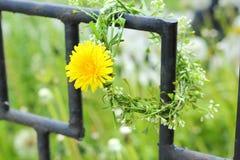 Våren blommar på ett metallraster Royaltyfri Bild