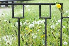 Våren blommar på ett metallraster Royaltyfria Bilder