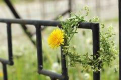 Våren blommar på ett metallraster Royaltyfria Foton