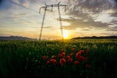 Våren blommar på solnedgången, nära Deva Romania Arkivfoto