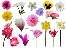 Våren blommar samlingen royaltyfri fotografi