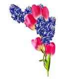 Våren blommar tulpan och hyacinter Fotografering för Bildbyråer