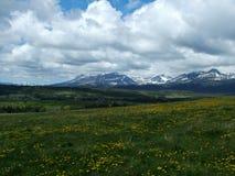 Våren blommar vid den östliga glaciären parkerar Fotografering för Bildbyråer