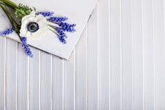 Våren blommar violeten och vit Arkivbild
