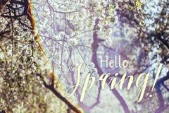 Våren blomstrar äppleträdet i solig dag royaltyfria foton