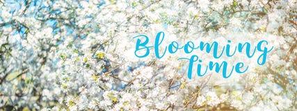 Våren blomstrar äppleträdet i solig dag arkivfoton