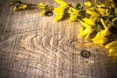 Våren för filialforsythiabakgrund fattar blomman Royaltyfria Foton