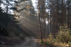 Våren för morgonen för strålar för solen för vägen för skogträd skuggar Arkivfoto