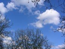 Våren fördunklar i en mycket genomskinlig himmel Arkivfoto