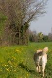 Våren går Arkivbilder