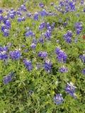 Våren har våren royaltyfria foton