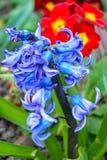 Våren har fjädrat Royaltyfri Fotografi