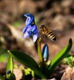 Våren har kommit Royaltyfria Foton