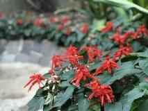 Våren i Hong Kong där är en variation av att blomstra för blommor arkivfoton