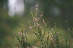 våren lämnar frodigt med suddighetsbakgrund - tappningfilmblick royaltyfria foton