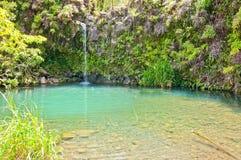 Våren matade pölen på vägen till Hana - Maui Arkivbild