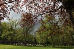 Våren på den gamla stadkyrkogården i Karlovy varierar fotografering för bildbyråer