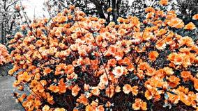 Våren på den pendleton konungen parkerar royaltyfria bilder