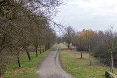 Våren parkerar, trädgränden i Frankenthal - Tyskland royaltyfri bild