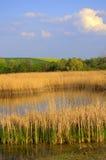 Våren sätter in blå himmel för sjön Arkivbild