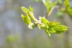 Våren slår ut på en grå bakgrund Arkivbilder