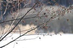 Våren snö, snö smälter, solen, gräs arkivfoton