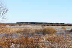 Våren snö, snö smälter, solen, gräs, floden, seagulls på floden arkivfoton