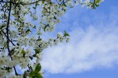 Våren solen, blå himmel, blommade trädet Royaltyfria Foton