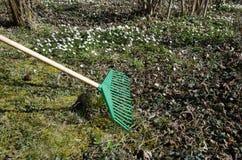 Våren som arbeta i trädgården med en gräsplan, krattar Royaltyfri Foto