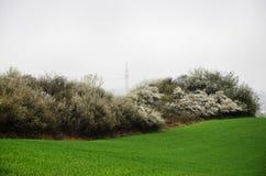 Vårfält. Fotografering för Bildbyråer